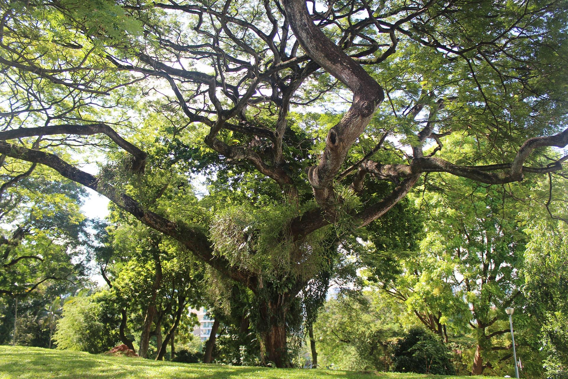 Tree-pruning-5