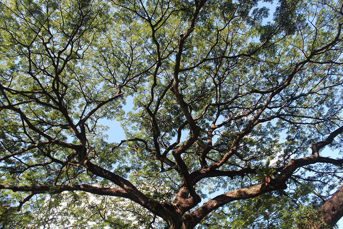 Tree pruning 3