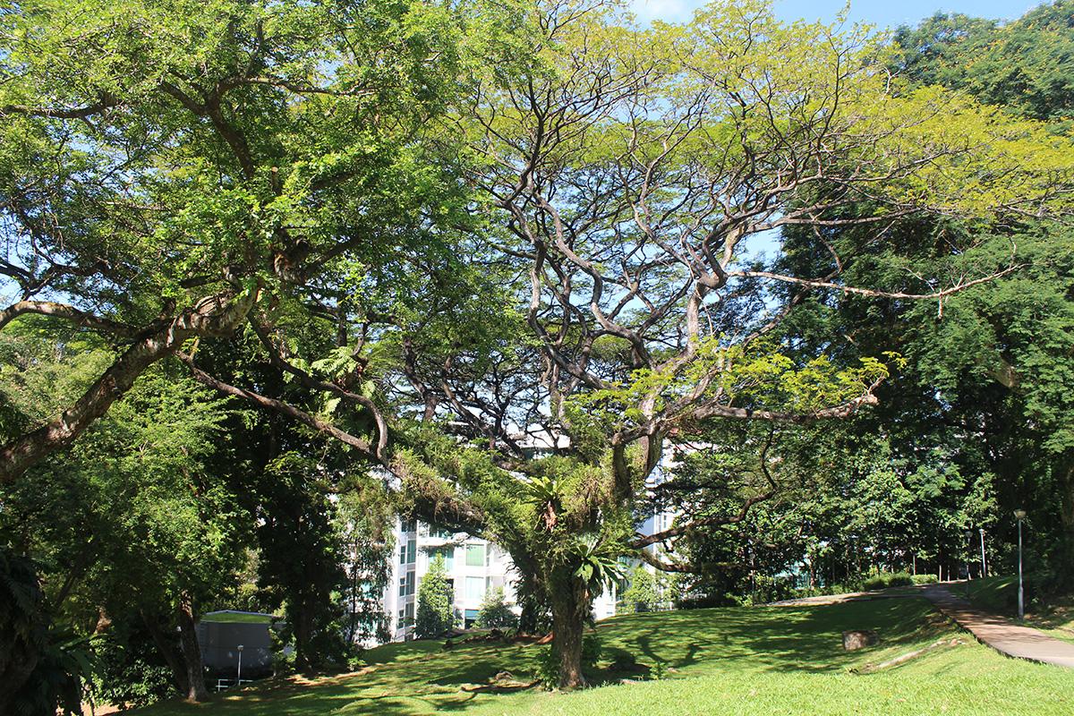 Tree pruning 6
