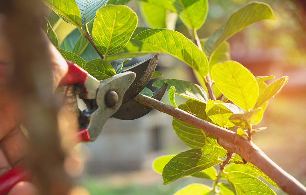 Why Should You Prune Your Trees