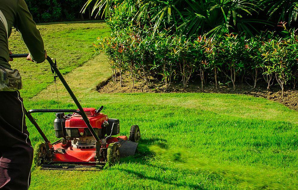 Why Should You Regularly Cut Your Grass