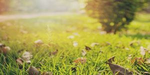What to look for in a landscape contractor